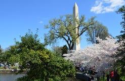 DC Washignton, Колумбия, США - 11-ое апреля 2015: Вишневые деревья полностью зацветают и памятник Вашингтона Стоковая Фотография