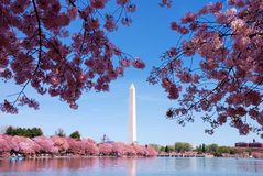 dc washington Royaltyfri Foto