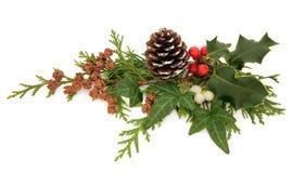 Décoration de flore de l'hiver Images libres de droits