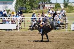 Découvrez l'équitation arrière Images libres de droits