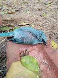 död fågel Arkivbild