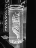 Död jätte- isopod i det glass röret Fotografering för Bildbyråer