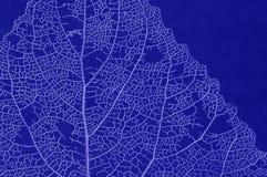 död leaf Arkivfoton