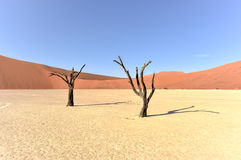 död namibia vlei Royaltyfri Bild