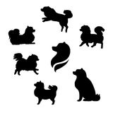 Ddwarf spitz vector silhouettes Royalty Free Stock Photo