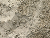 Dżdżysty piaska zbliżenie Obraz Stock