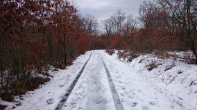‰ De à gervölgy en hiver photo libre de droits