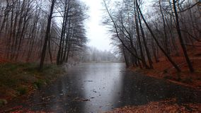 ‰ De à gervölgy en hiver photographie stock