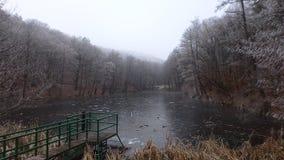 ‰ De à gervölgy en hiver Images libres de droits