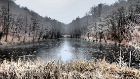 ‰ De à gervölgy en hiver image stock