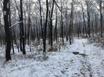 ‰ De à gervölgy en hiver près du ` de gertetÅ de ‰ de à photographie stock