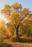 De één meer herfst Stock Foto's
