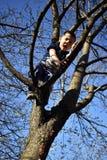 de 4 éénjarigenjongen op de boom heeft probleem om neer uit boom te komen stock foto's