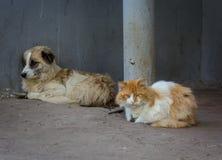 ¡ De Ð à et chien Photo libre de droits