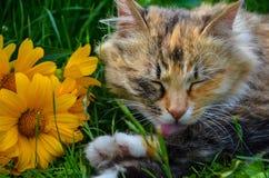 ¡ De Ð com em flores na grama Fotos de Stock Royalty Free