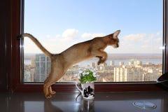 ¡ De Ð no salto através de um vaso Fotografia de Stock Royalty Free