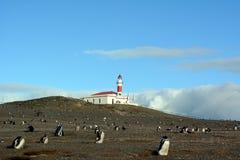 ¡ De Ð olony de pinguins de Magellanic fotografia de stock