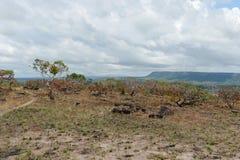 De östliga slättarna av Colombia Royaltyfria Foton