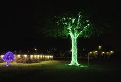 De η εστίαση των όμορφων φω'των διακοσμεί τα δέντρα τη νύχτα στοκ φωτογραφία