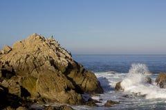 De aalscholvers van Brandt op een rots, 17 Mijlaandrijving Stock Foto's
