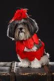 De aanbiddelijke hond gekleed met rode harten en grote rood nam de boog van het bloemlint toe stock foto's