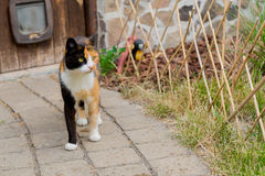 De aanbiddelijke kat die van het land onderaan een steenweg lopen op een landbouwbedrijf Stock Afbeeldingen