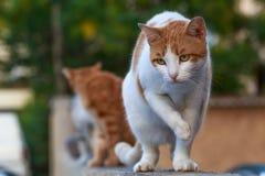 De aandachtige kat ziet hond op de straat royalty-vrije stock afbeeldingen