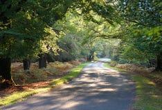 De Aandrijving van de herfst Stock Fotografie