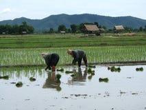 De aanplanting van de rijst in Azië Royalty-vrije Stock Afbeelding