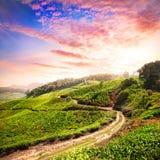 De aanplanting van de thee in Munnar Royalty-vrije Stock Fotografie