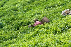 De aanplanting van de thee in Rwanda royalty-vrije stock afbeeldingen