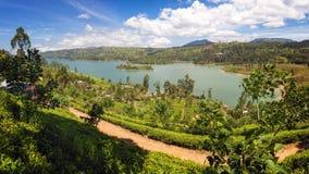 De aanplanting van de thee, Sri Lanka Stock Foto