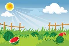 De aanplanting van de watermeloen Stock Foto's