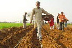 De aanplanting van het suikerriet Stock Fotografie