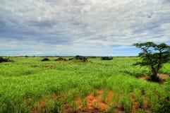 De Aanplanting van het suikerriet Royalty-vrije Stock Fotografie
