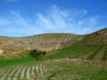 De aanplanting van het suikerriet op de heuvel Stock Foto