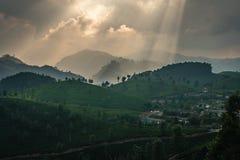 De aanplanting van de Munnarthee bij zonsondergang Kerala groen India royalty-vrije stock fotografie