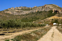 De aanplanting van olijfbomen in Spanje Stock Fotografie
