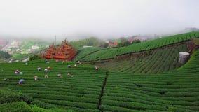 De Aanplanting van de Oolongthee op Alishan-Bergengebied, Taiwan Lucht Mening stock footage