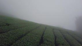 De Aanplanting van de Oolongthee op Alishan-Bergengebied, Taiwan Satellietbeeld in Misty Foggy Weather stock videobeelden