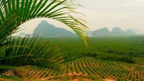 De aanplantingen van de rijen van de oliepalm worden hierboven gezien van Tropisch Landschap