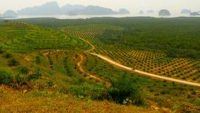 De aanplantingen van de rijen van de oliepalm worden hierboven gezien van Tropisch Landschap stock videobeelden
