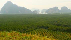 De aanplantingen van de rijen van de oliepalm worden hierboven gezien van Tropisch Landschap stock footage
