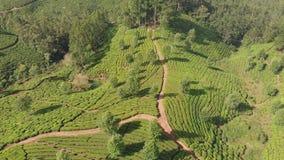 De aanplantingen van de satellietbeeldthee van India De staat van Kerala Dichtbij het meer Matupetty stock video