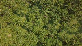 De aanplantings hoogste mening van de kokosnotenpalm van hommel Groene tropische palm op kokosnotenlandbouwbedrijf in het satelli stock footage