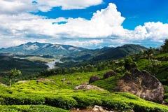 De aanplantingslandschap van de thee. Munnar, Kerala, India stock fotografie