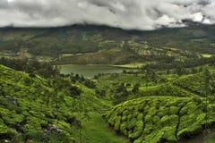 De aanplantingsvallei van de thee Stock Afbeeldingen