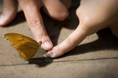 De aanraking van de vlinder stock foto