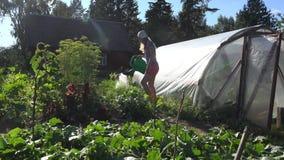 De aantrekkelijke groenten van de het watertuin van de landbouwersvrouw dichtbij serre tegen avondzonlicht 4K stock footage