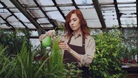 De aantrekkelijke vrouwelijke landbouwer die schort dragen bestrooit installaties met water terwijl het werken binnen grote serre stock video